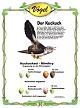 Der Kuckuck - Anpassung an das Wirtsvogelei
