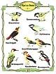 Vögel des Waldes 1