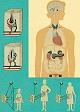 Lehrtafel - Hormondrüsen