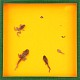 Schaukasten - Frosch