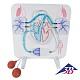 Blutkreislauf-Funktionsmodell