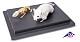 Tierskelett- Maus und Mausskelett
