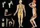 Lehrtafel - Skelett und Muskeln