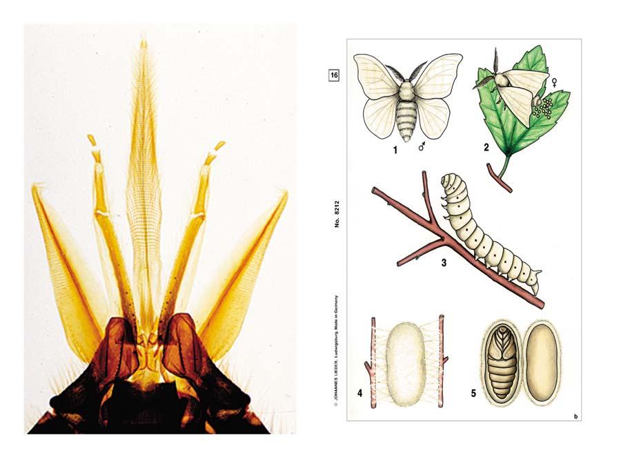Präparate - Insekten
