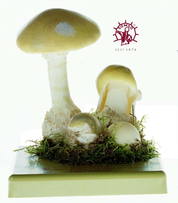 Pilzmodell - Grüner Knollenblätterpilz