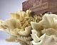 Bio Pilz-Zuchtset Limonenpilz