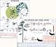 Grundwissen Botanik 2 - Bäume