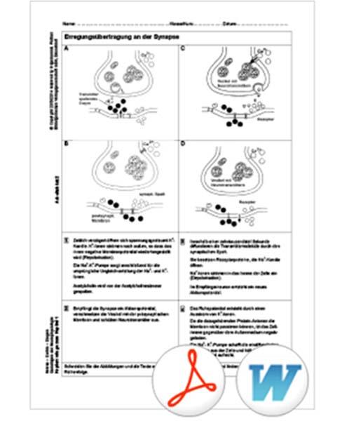 interaktive tafelbilder nerven gehirn drogen 5508025 biologie anatomie mensch sinne. Black Bedroom Furniture Sets. Home Design Ideas