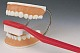 Riesen-Zahnpflegemodell