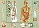 Lehrtafel - Empfindung und Lenkung durch das Nervensystem