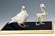 Tierskelett - Taube mit präparierter Taube